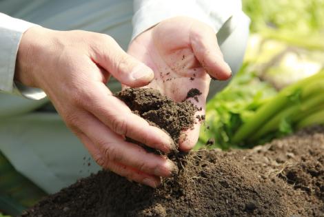 良い土から穫れる<br /> 良い野菜。
