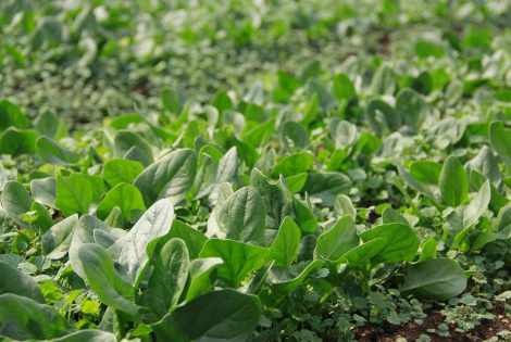草が育つ、<br /> おいしい野菜が育つ。