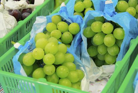 一年中、細かい目配りで育てる葡萄