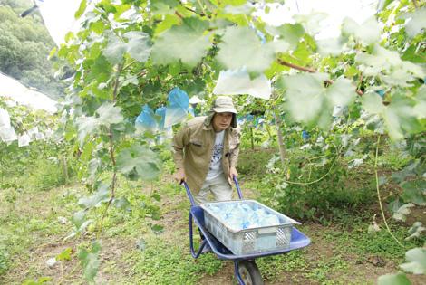 地元の方に愛される葡萄を作りたい